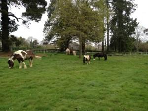 Le troupeau au prè