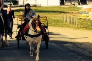 Le roi de la carriole !